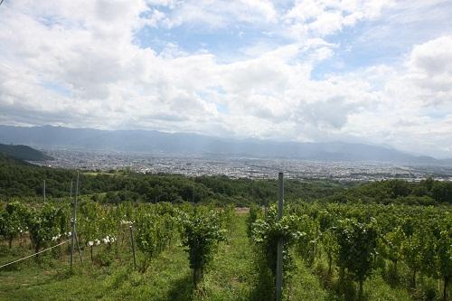 登美の丘ワイナリー畑全景