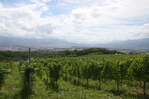 登美の丘ワイナリーのブドウ畑