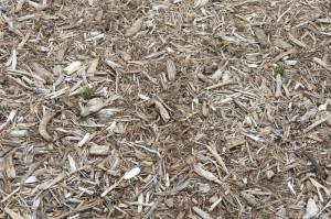ブルーベリー狩りのマルチは木カス