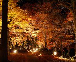 山中湖紅葉ライトアップ